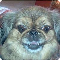 Adopt A Pet :: Izzi-PA - Emmaus, PA
