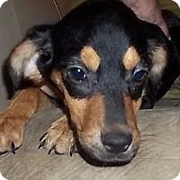 Adopt A Pet :: Tocara - Londonderry, NH