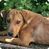 Adopt A Pet :: Tarah - Lufkin, TX