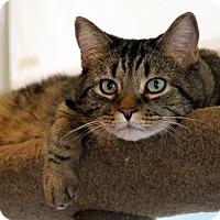 Adopt A Pet :: Wally - Gaithersburg, MD