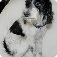 Adopt A Pet :: Prinz - Umatilla, FL