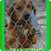Adopt A Pet :: ASTRO - Manchester, NH