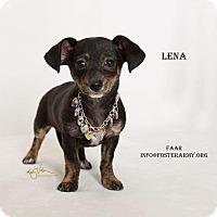 Adopt A Pet :: Lena - Riverside, CA