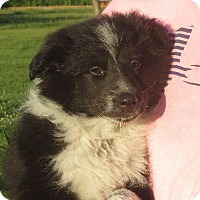 Adopt A Pet :: Rafferty - Westport, CT