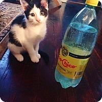 Adopt A Pet :: Elsie Mae - Philadelphia, PA