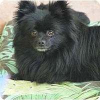 Adopt A Pet :: Watson - Adoped! - Houston, TX