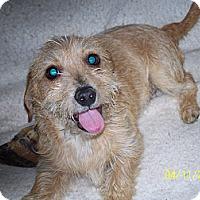 Adopt A Pet :: Leo - Andrews, TX