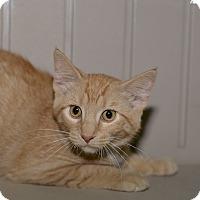 Adopt A Pet :: Kaden - Medina, OH