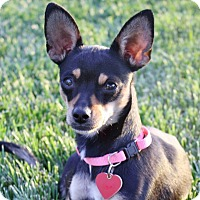 Adopt A Pet :: Ophelia - 7 lbs! - Bellflower, CA
