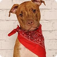 Adopt A Pet :: Copper - Titusville, FL