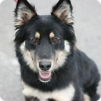 Adopt A Pet :: Charlette - Canoga Park, CA