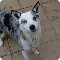Adopt A Pet :: Pearl - Athens, AL