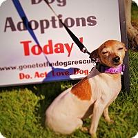Adopt A Pet :: Esme - Redondo Beach, CA