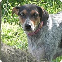 Adopt A Pet :: Jubilee - Kansas City, MO