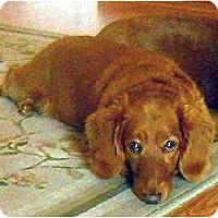 Adopt A Pet :: Fritz - San Jose, CA