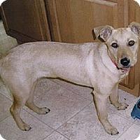 Adopt A Pet :: Baby - Chesapeake, VA