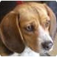 Adopt A Pet :: Patty - Beachwood, OH