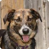 Adopt A Pet :: Lena - Norman, OK