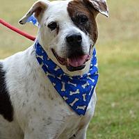 Adopt A Pet :: Bones - Jackson, MS