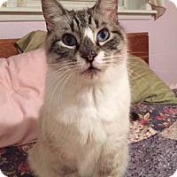 Adopt A Pet :: Bubba Joe - Merrifield, VA