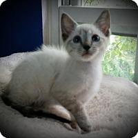 Adopt A Pet :: Nash - Fairborn, OH