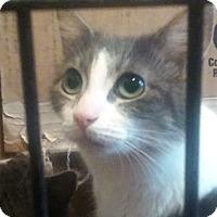 Adopt A Pet :: Julia - Savannah, GA