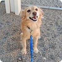 Adopt A Pet :: CHARLIE - Hurricane, UT