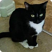 Adopt A Pet :: Oreo - Lancaster, CA