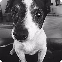 Adopt A Pet :: Julia - Knoxville, TN