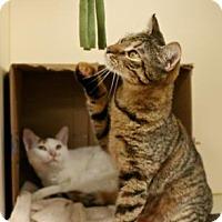 Adopt A Pet :: La Pinta - Gloucester, MA