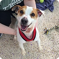 Adopt A Pet :: Cowboy - Thousand Oaks, CA