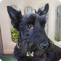 Adopt A Pet :: Best Buds Guss & Caesar *PENDING* - Dallas, TX