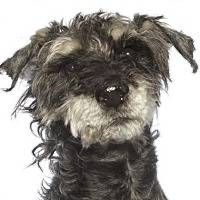 Adopt A Pet :: Vasco - oakland park, FL