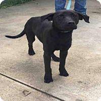 Adopt A Pet :: A431415 - San Antonio, TX
