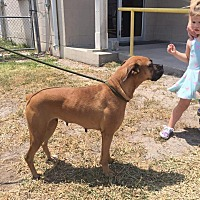 Adopt A Pet :: Nunu - Austin, TX