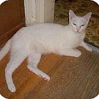 Adopt A Pet :: Sage - Schertz, TX