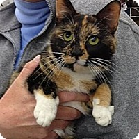 Adopt A Pet :: Diseree - Troy, OH