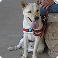 Adopt A Pet :: Cody - Wickenburg, AZ