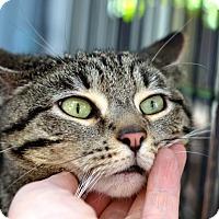 Adopt A Pet :: Alice - Brooklyn, NY