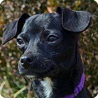 Adopt A Pet :: Buttons - Bridgeton, MO