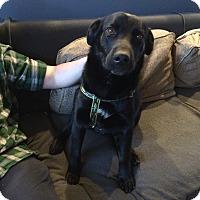 Adopt A Pet :: Dodger - Huntsville, AL