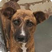 Adopt A Pet :: Trinity - Fort Smith, AR