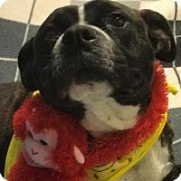 Adopt A Pet :: Jaylin - Lebanon, ME