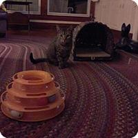 Adopt A Pet :: Peanut Butter - Kinston, NC