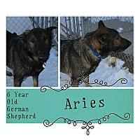 Adopt A Pet :: Aries - Clear Lake, IA