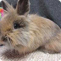 Adopt A Pet :: Keiko - Newport, DE