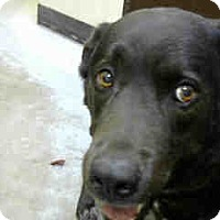 Adopt A Pet :: URGENT 05/22 BIG BEAR - San Bernardino, CA