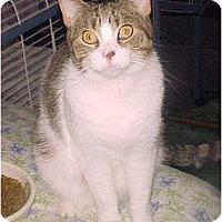 Adopt A Pet :: Nutmeg - Jenkintown, PA