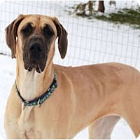 Adopt A Pet :: Maggie - Pearl River, NY
