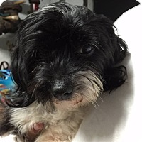 Adopt A Pet :: Diana - Sherman Oaks, CA